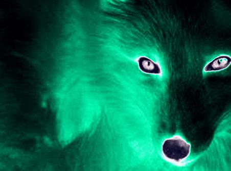 intervert snow wolf