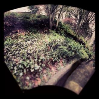 my walk way
